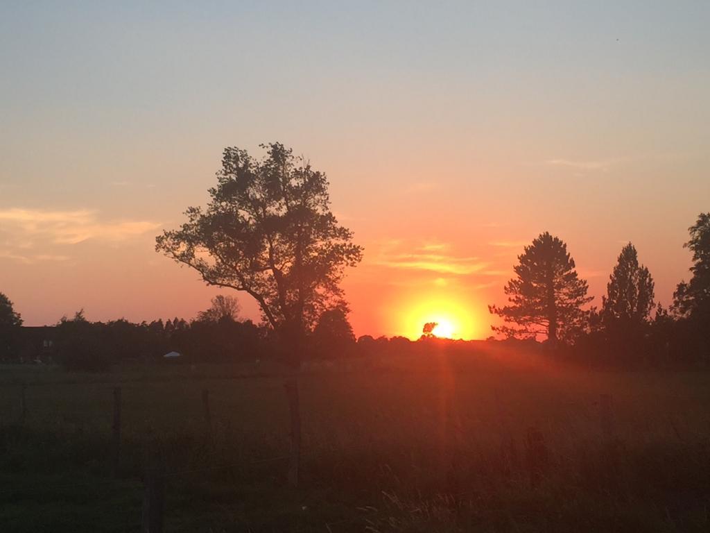 Sonnenuntergang im Wold